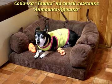 Лежанки для домашних животных