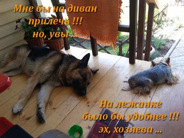 Изготовление мягкой мебели для собак
