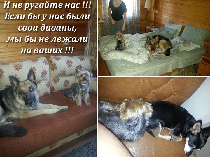Лежанки и диваны для собак на заказ