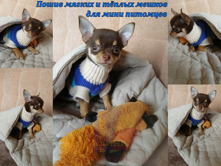 Мешок для мини собачки чихуахуа на заказ